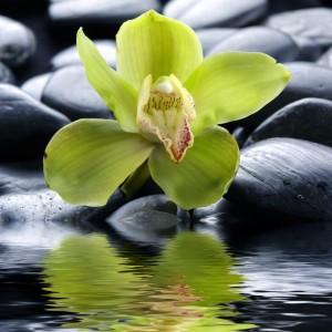 shutterstock_57261976 orchid groen